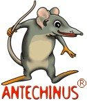 Antechinus Animator Professional